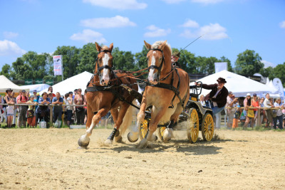 "EQUITANA Open Air 2016: Reitsport live ""air""leben"